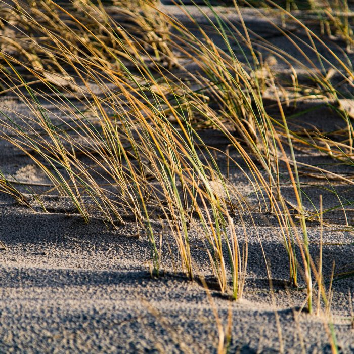 Sand, Gras, Wind