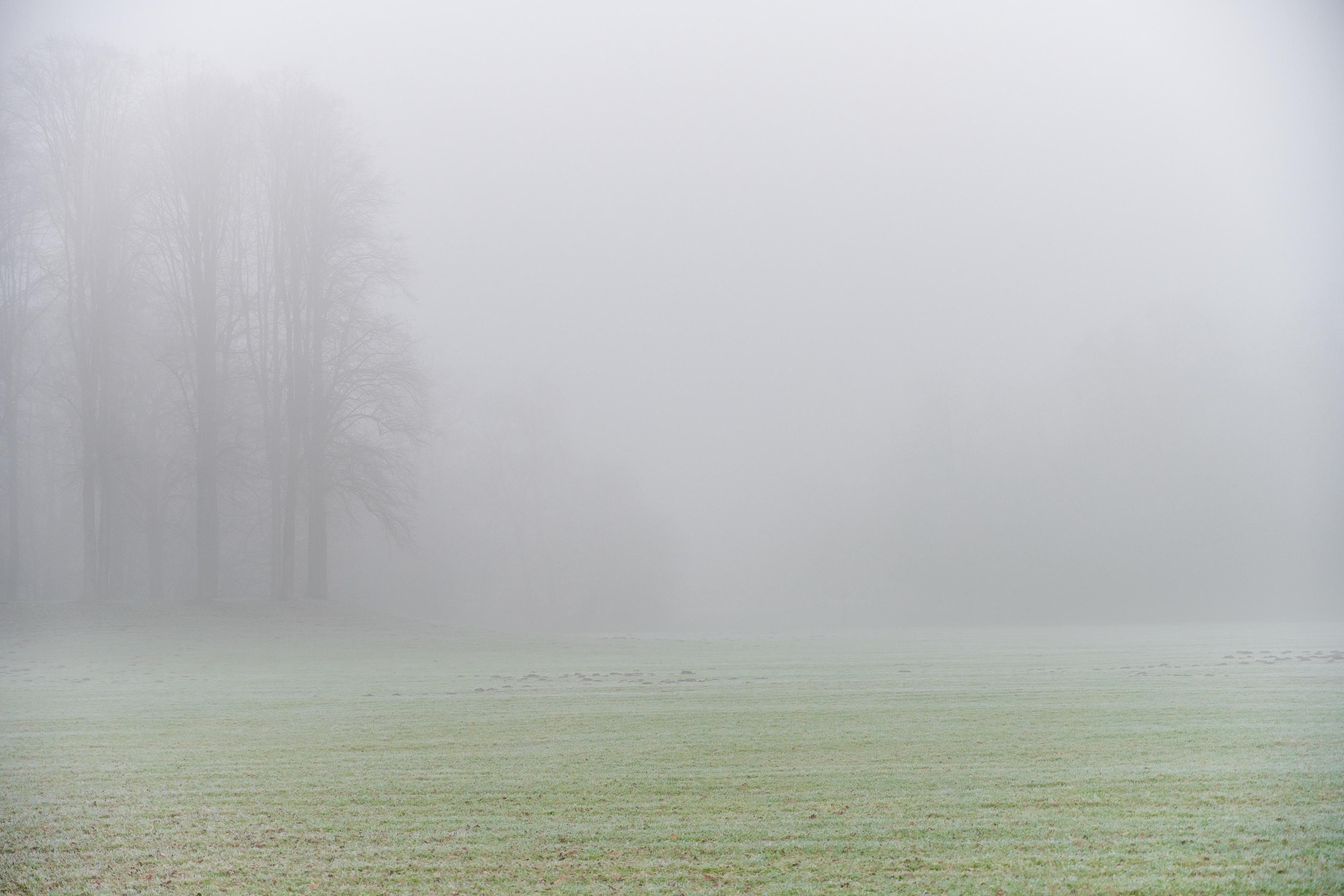 Nebel im Bürgerpark